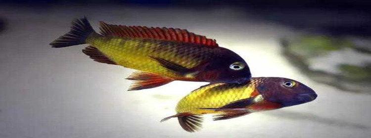 养鱼赚钱的软件