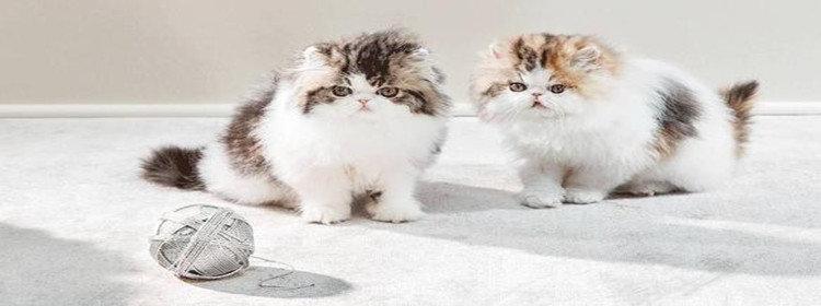 养猫赚钱软件